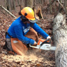 Chainsawing for Sandy Recovery