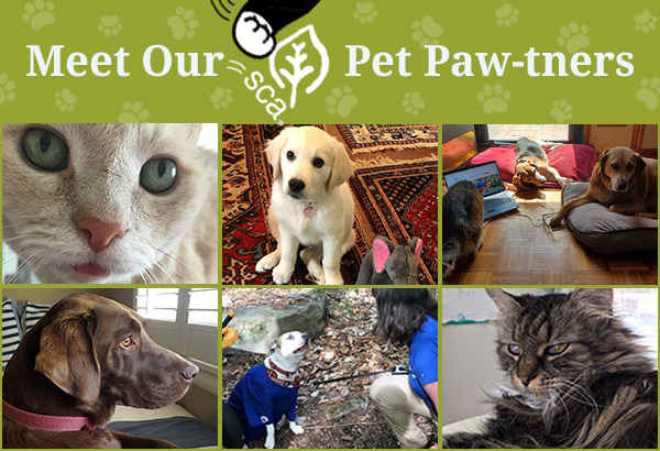 Meet Our Pet Paw-tners