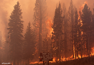 Yellowstone Wildfire photo
