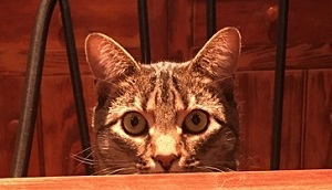 Faye's Cat Photo