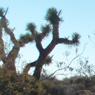 Desert Restoration